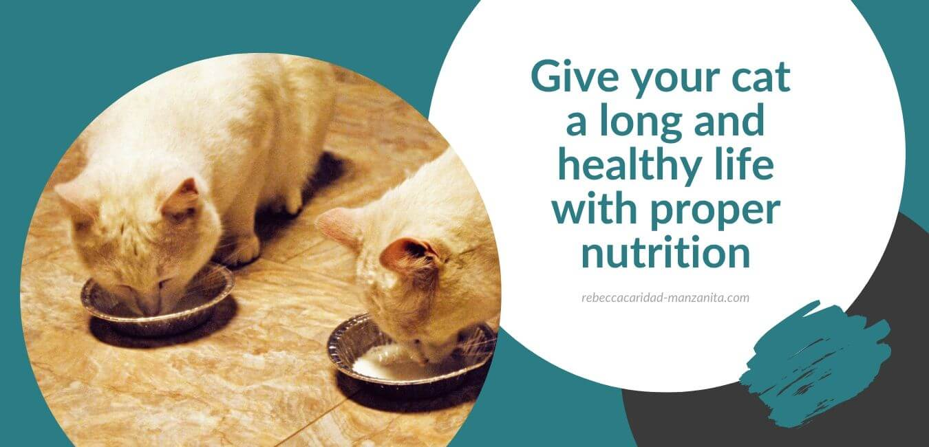 Give your cat a long and healthy life with proper nutrition