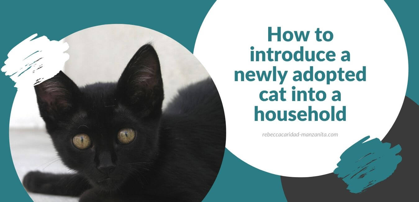 How to introduce a newly adopted cat into a household