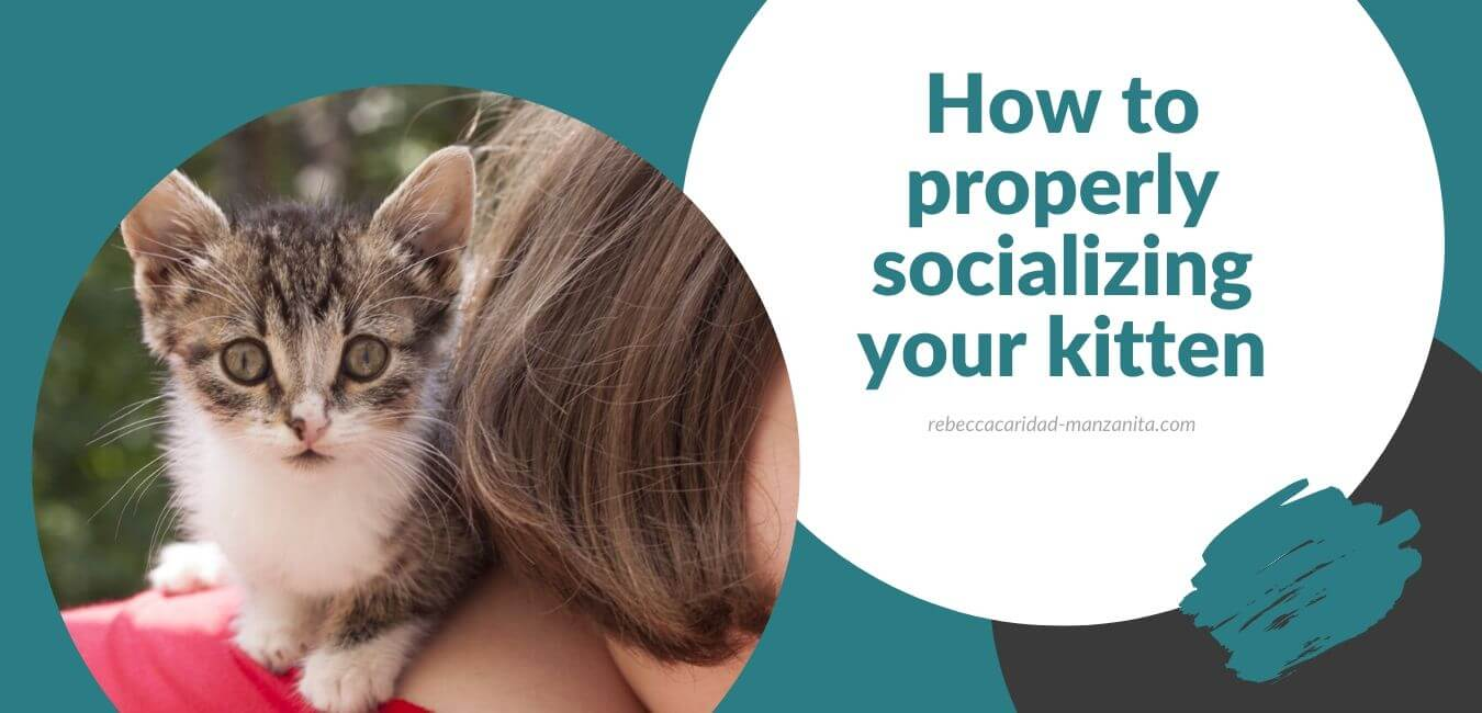 How to properly socializing your kitten