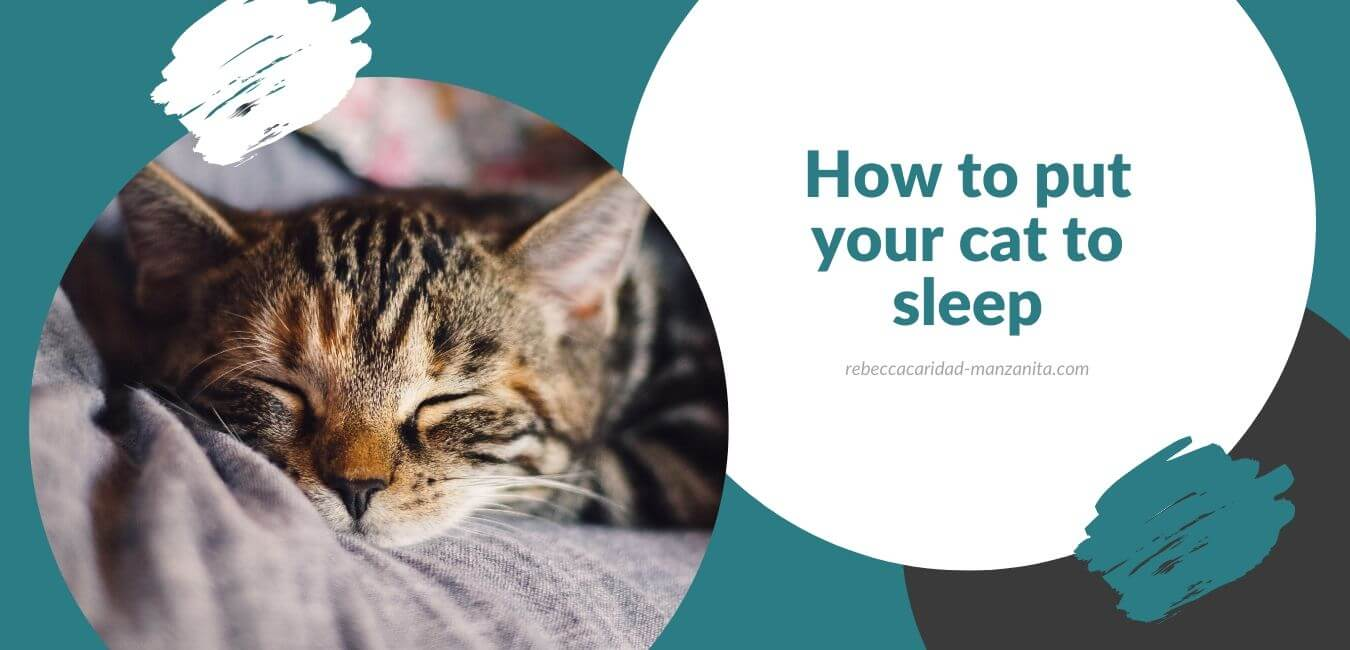 How to put your cat to sleep