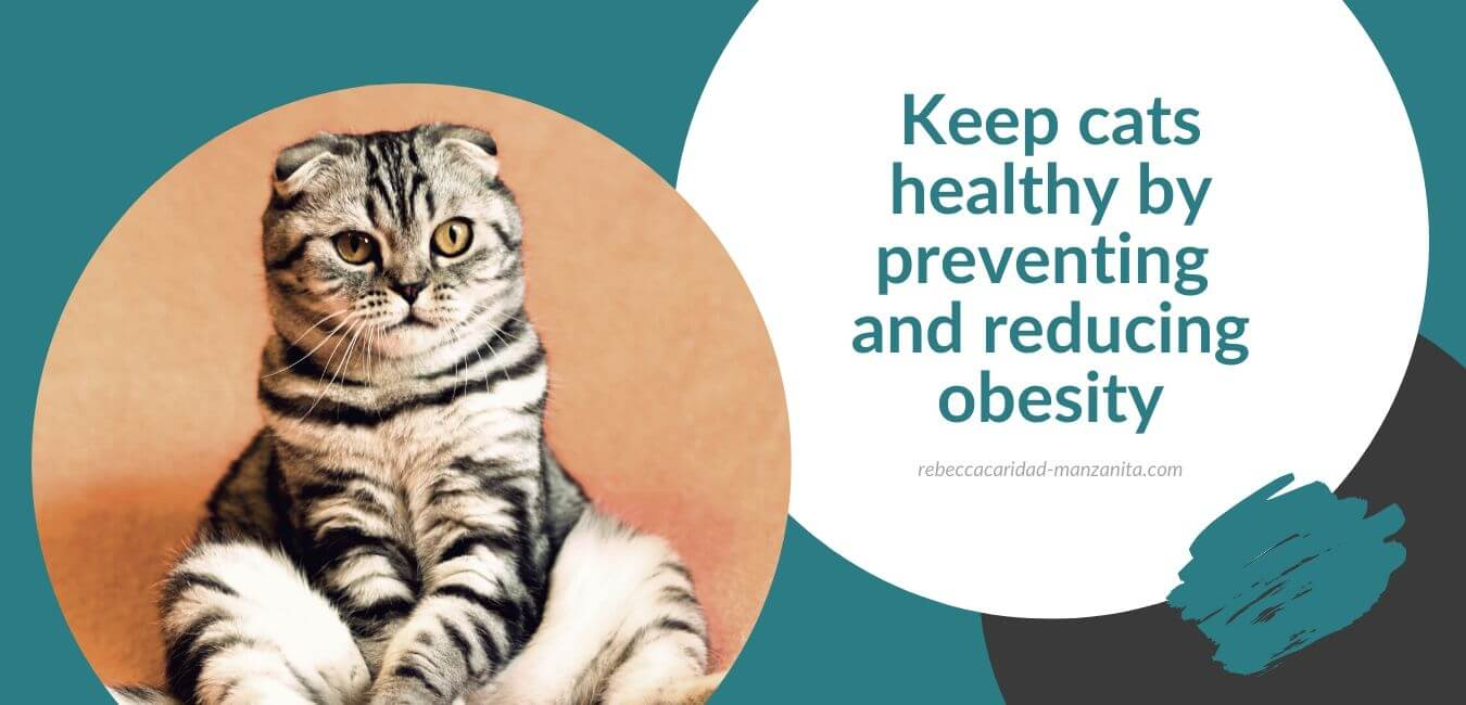 Keep cats healthy by preventing and reducing obesity