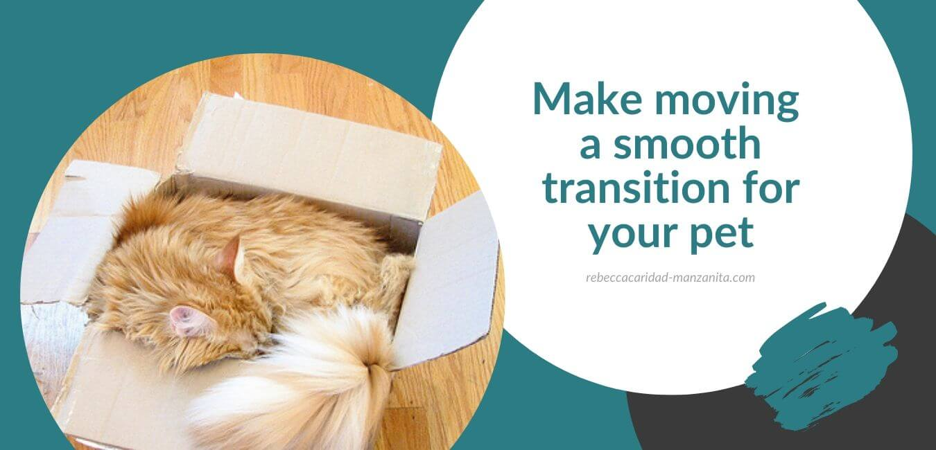 Make moving a smooth transition for your pet