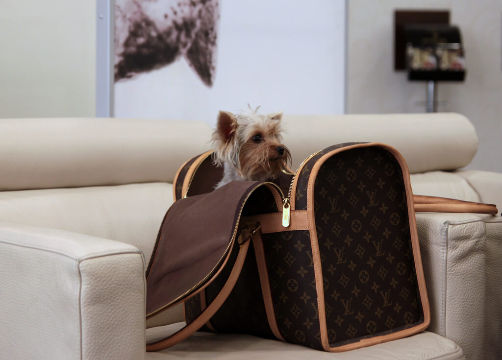 avoid complications with pets during travel